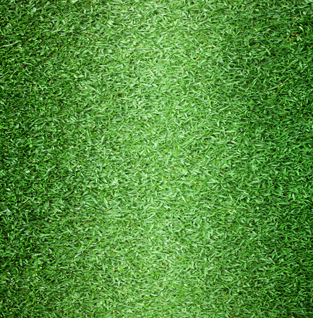 golf field: Lawn golf course outdoor football field background texture with bright colors.