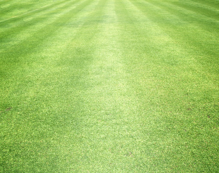 beautifully: Grass background Golf Courses green lawn beautifully.