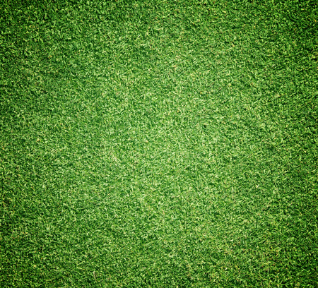 lawn grass: Grass background Golf Courses green lawn beautifully.
