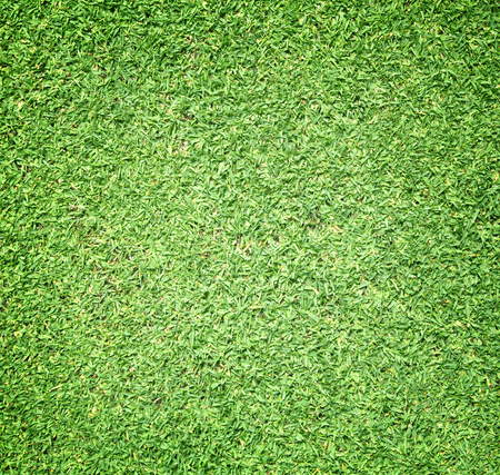 golf field: Grass background Golf Courses green lawn beautifully.