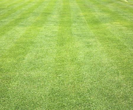 campo di calcio: Erba sfondo Golf verde prato splendidamente. Archivio Fotografico