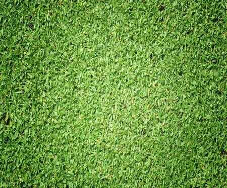 soccer grass: Grass background Golf Courses green lawn beautifully.
