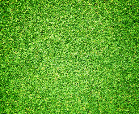 blade of grass: Golf Courses green lawn texture background, beautiful. Stock Photo
