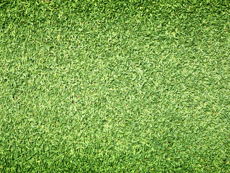 fields  grass: Golf Courses green lawn pattern textured background.