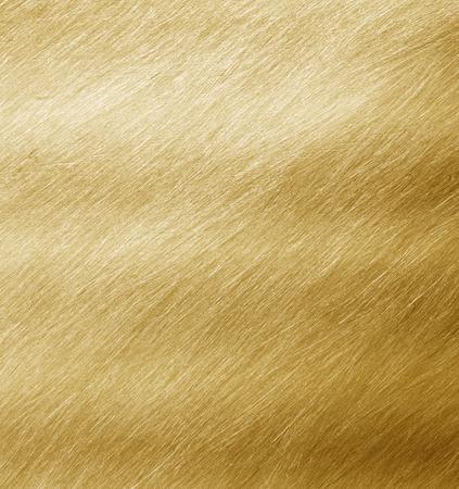 shiny gold: Shiny yellow leaf gold foil texture backgroun