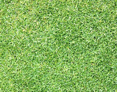 bluegrass: Golf Courses green lawn pattern textured background.