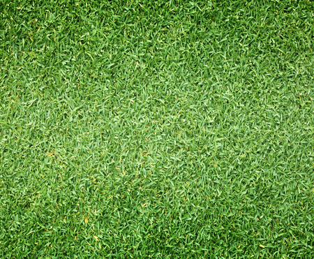 campo di calcio: Campi da golf prato verde modello con texture di sfondo.