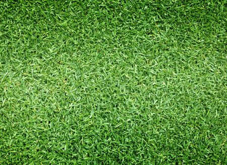putting green: Golf Courses green lawn pattern textured background.