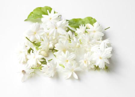jardines con flores: Flores de jazmín fresco aisladas sobre fondo blanco.