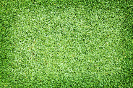 bluegrass: Background green grass golf courses and beautiful natural green grass. A football field Stock Photo