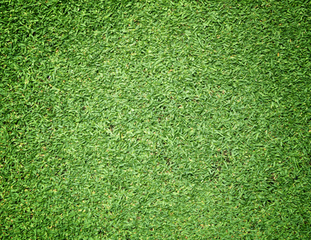bluegrass: Golf Courses green lawn natural green background.