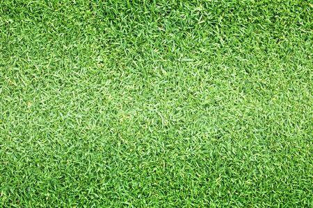 Campos de golf de césped verde la naturaleza al aire libre de la textura del fondo