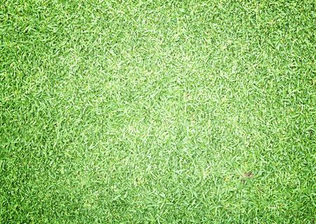 bluegrass: Golf Courses green lawn outdoor nature Background texture