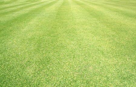 garden lawn: Golf Courses green lawn pattern textured background.