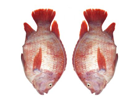 cyprinoid: Fresh fish isolated on the white background. Stock Photo
