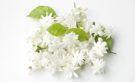 Natuurlijke jasmijn bloemen op een witte achtergrond.
