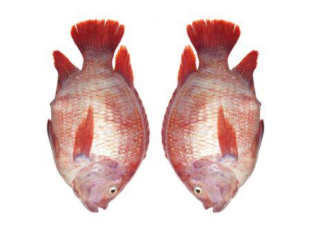 cyprinoid: Fresh fish isolated on the white background. Stock Photo