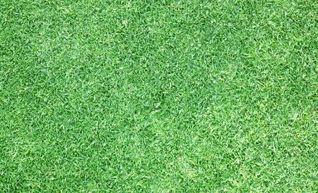 turf: turf green background texture outdoor natural grass. Stock Photo