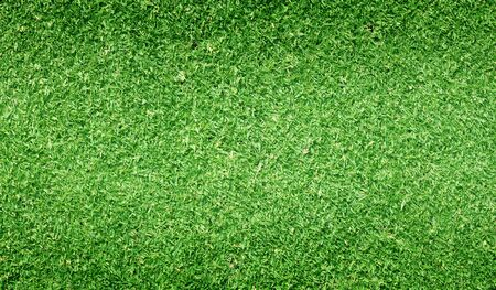 Green grass background turf grass surface abstract.
