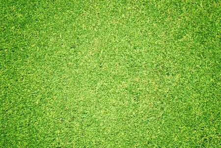 turf: Green grass background turf grass surface abstract.