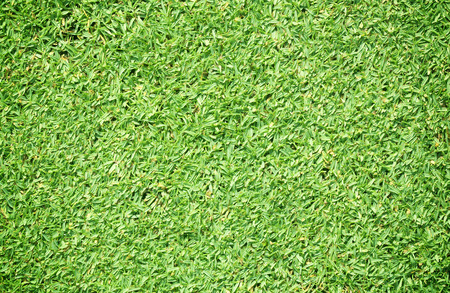 bluegrass: The grass lawn background natural green grass leaves.
