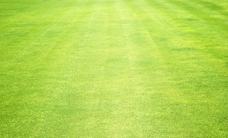 turf: Green grass background turf grass surface abstract