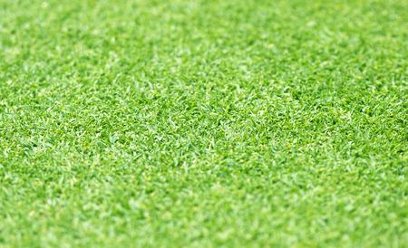 Green lawn Background blur bokeh natural light.