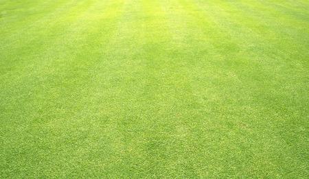 steel sheet: grass background Golf Courses green lawn pattern textured background.
