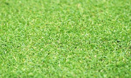 grass background Golf Courses green lawn pattern textured background.