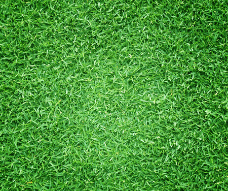 back yard: grass background Golf Courses green lawn pattern textured background.