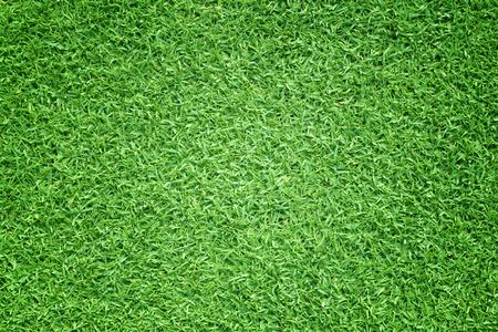 Green grass background Golf Courses green lawn pattern textured background. Stok Fotoğraf
