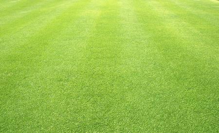 Green grass nature outdoor pattern textured background.