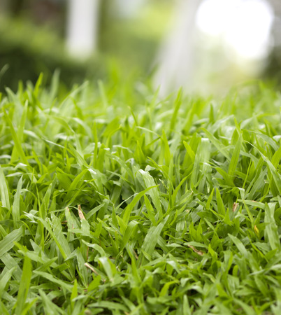 pasto sintetico: Natural background of green grass Small grass football ground