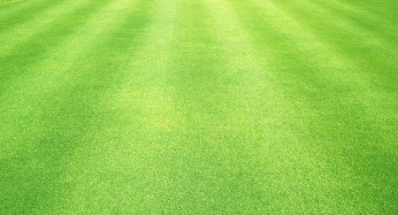 Natural background of green grass Small grass football ground