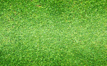 Green grass background Golf Courses green lawn pattern textured background. Stock Photo
