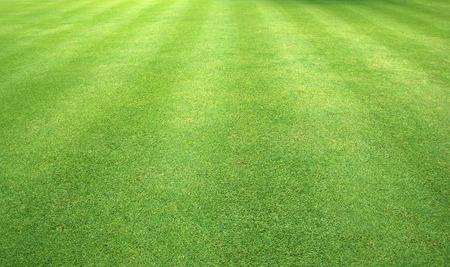 Green grass background green lawn pattern textured background. 写真素材