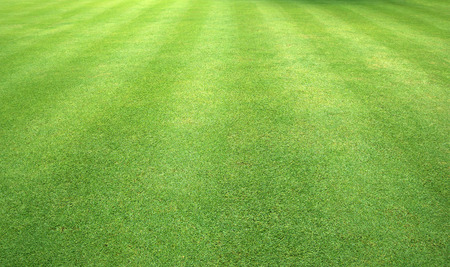 Green grass background green lawn pattern textured background. Standard-Bild