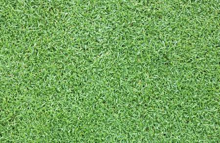 Grass field background Green grass natural background texture