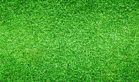 Green grass background Beautiful grass football field