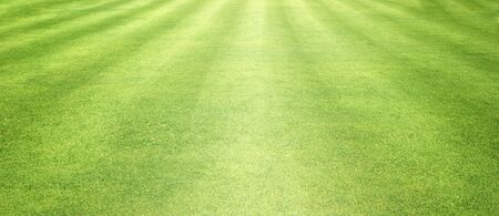 Green grass background Beautiful grass football field