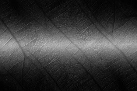 Abstract nature texture black leaves for background