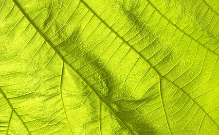 Abstract nature texture green leaves for background 写真素材