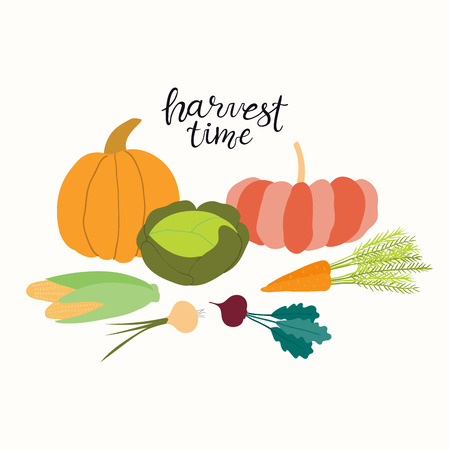Hand drawn vector illustration of vegetables, pumpkins, cabbage, beet, carrot, onion, corn, with lettering quote Harvest Time. Isolated objects on white background. Flat style design. Concept for fall