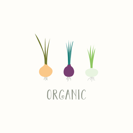Hand drawn minimal vector illustration of different onions, with lettering quote Organic. Isolated objects on white background. Flat style design. Concept for gardening, autumn harvest.