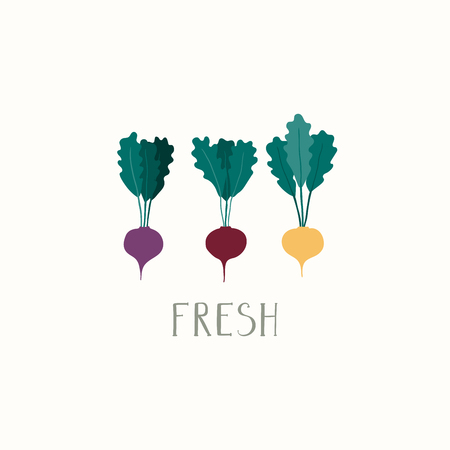 Hand drawn minimal vector illustration of different beetroots, with lettering quote Fresh. Isolated objects on white background. Flat style design. Concept for gardening, autumn harvest.