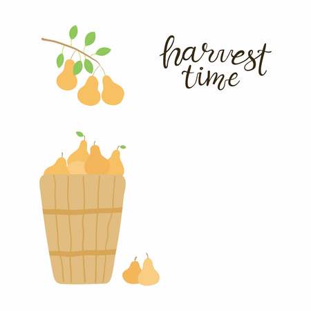 Hand drawn vector illustration of a basket with pears, branch, with lettering quote Harvest time. Isolated objects on white background. Flat style design. Concept for gardening, autumn harvest.