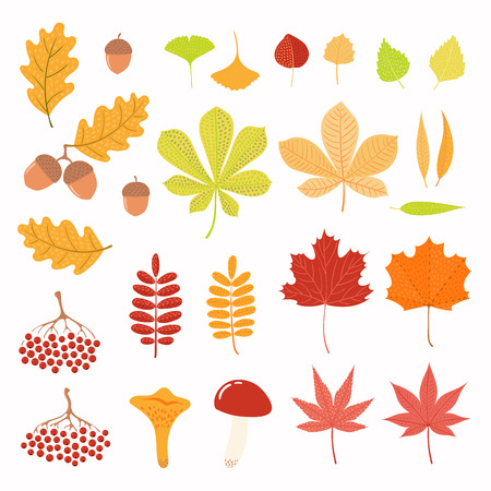 Big autumn set with leaves, berries, acorns, mushrooms. Isolated objects on white background. Hand drawn vector illustration. Flat style design. Concept for season change. Vectores
