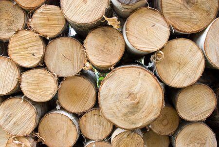 Feu de bois de bouleau Banque d'images