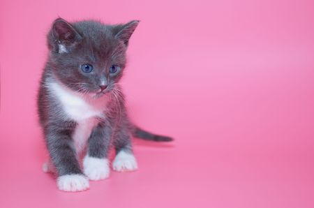 moustached: Cute kitten on pink background Stock Photo