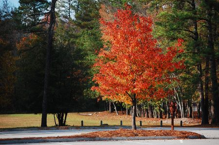 Foliage at a South Carolina state park. photo